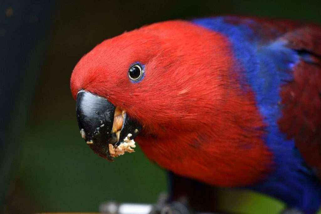 La empresa de alimentación de animales Versele-Laga y Loro Parque cumplen 18 años de colaboración