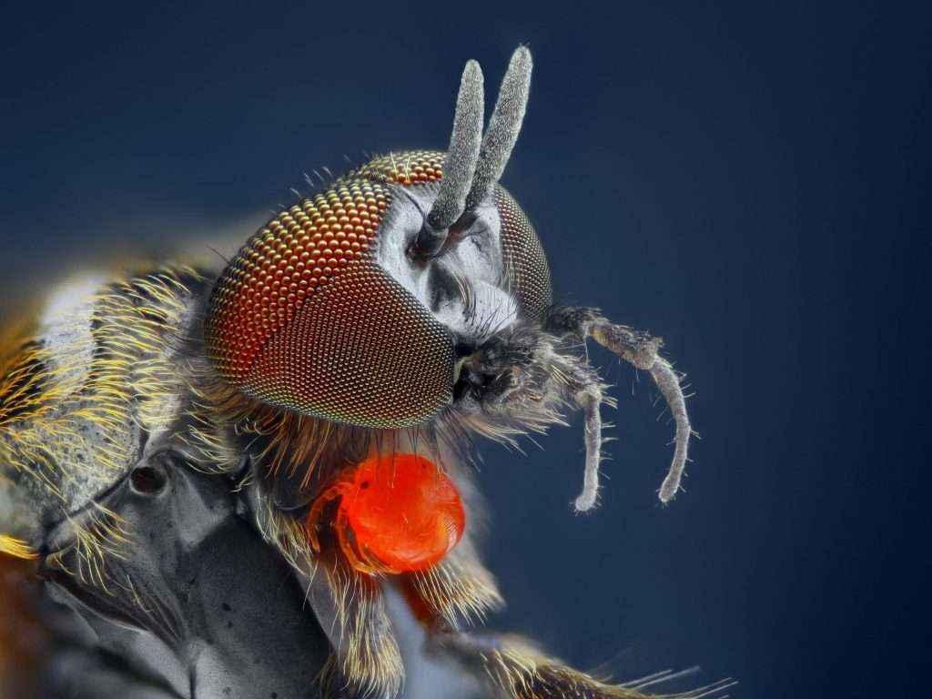 Rentokil Initial: Cómo protegerse de la plaga de mosca negra que causa estragos en Madrid