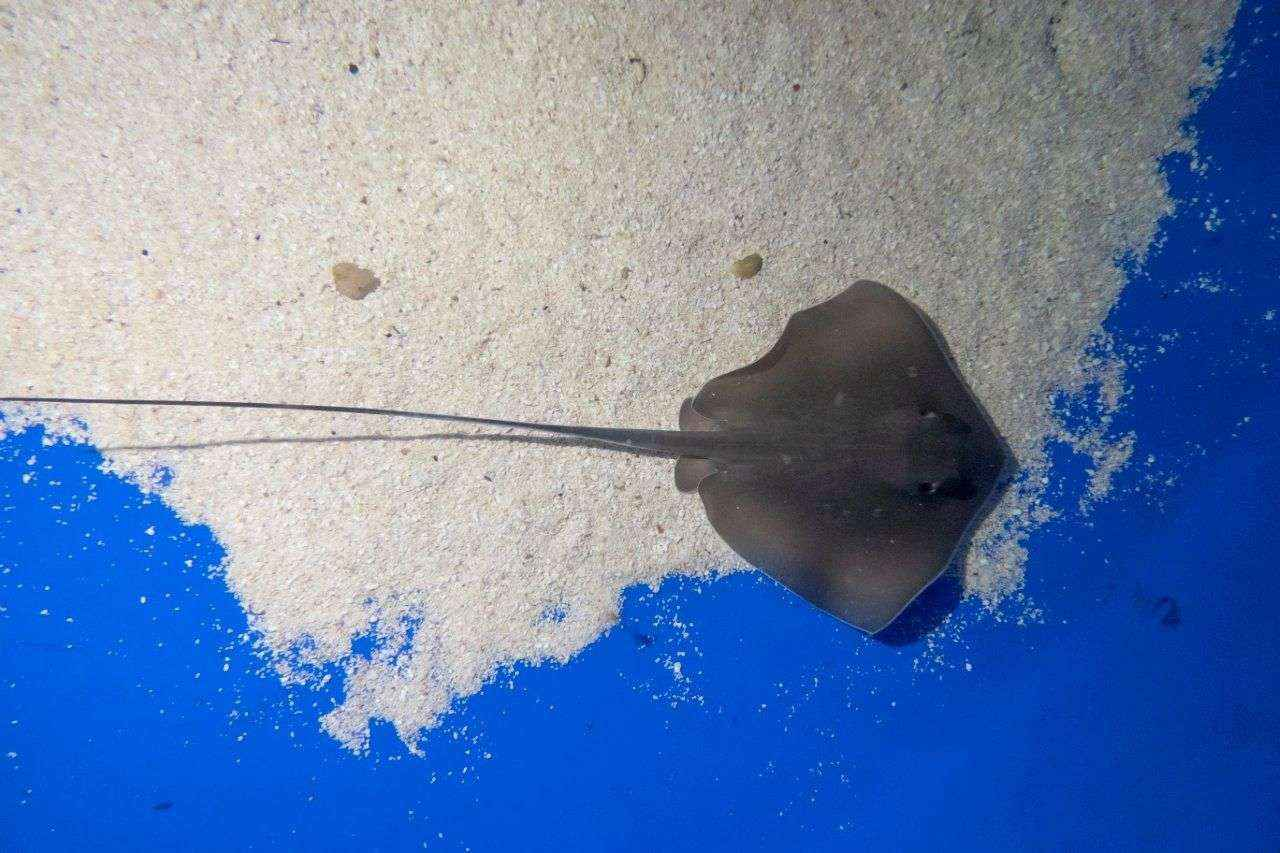 Nacen varias crías de chucho en el acuario de Loro Parque
